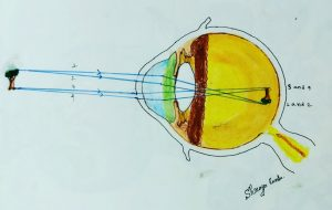 Schematic Eye and Reduced Eye